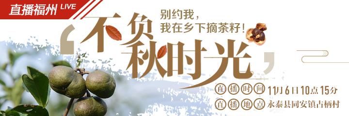 现场直播:摘茶籽咯!福州永泰一万多亩油茶林喜获丰收
