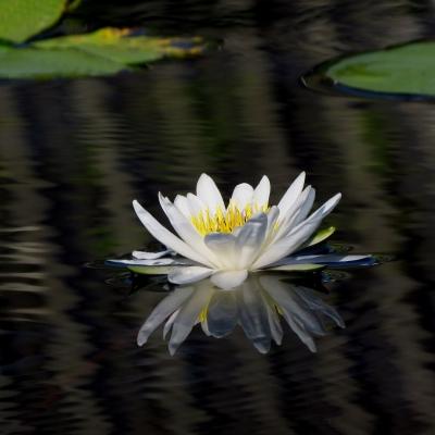 用相机留住花开的曼妙瞬间---花卉摄影课程来了
