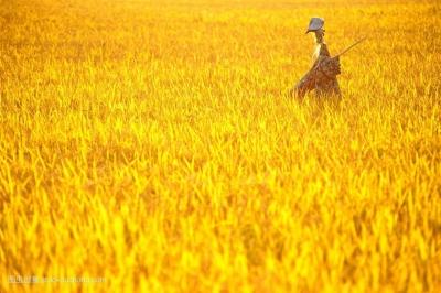 闽清首届农民丰收节的脚步近了,这里有个农民的大本营!