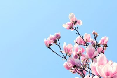 那么美的花卉写真都是怎样拍摄出来的?