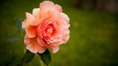 Get新技巧,拍摄花卉时原来背景还可以这样处理