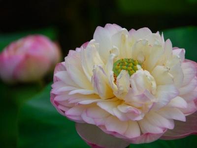 花卉摄影的意境与内涵