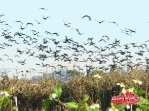 """观鸟""""黄金期""""来啦!福州这个地方宛若""""鸟的天堂"""""""