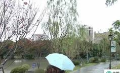 西湖左海新添亮色 园区引进百株红枫