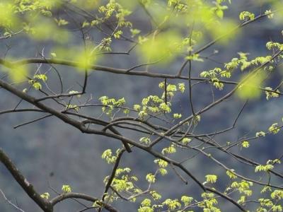 """春分来临气温""""上蹿下跳"""" 福州今天30℃明天仅16℃"""