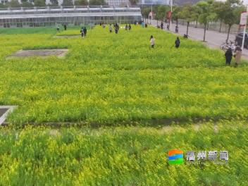 清明时节话清明 福州习俗知多少?