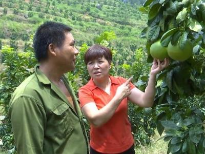 市人大代表林巧清:心系乡村 让农民有更多获得感