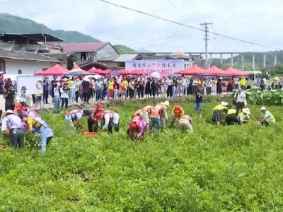 永泰举办首届两岸花生节