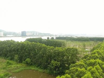 马航洲湿地保护修复预计国庆前完工