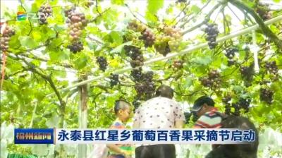 永泰县红星乡葡萄百香果采摘节启动