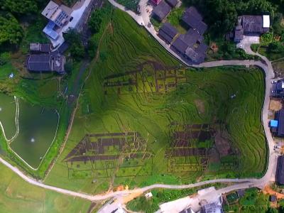 【视频】靓!稻田彩绘庄寨图 就在永泰西寨村