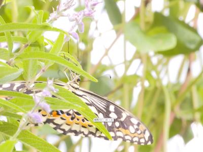 福州首家蝴蝶研学基地开园啦!赴一场与蝴蝶的约会吧