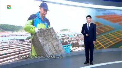 """关注丨连江鲍鱼的""""前世今生"""""""