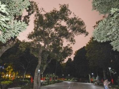 金山公园将改造林下空间 为市民增加更多休闲空间