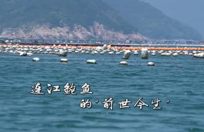 """连江鲍鱼的""""前世今生"""""""