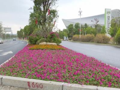 南江滨东大道部分路段完成景观提升