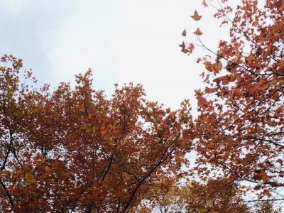 """是心动的感觉!福州福清大化山的""""枫""""景美哭了"""