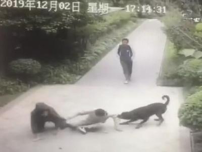 视频曝光!小区惊现恶犬 一男子被撕咬至伤