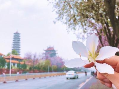 云赏花,你想念的榕城春色,在这里