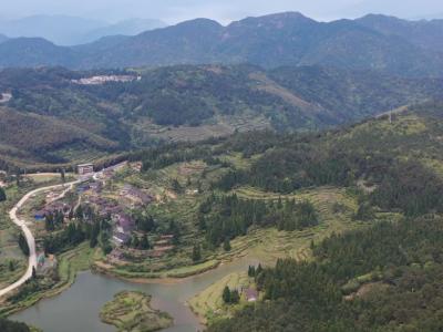 【视频】抢抓农时种植灵芝 林下经济助力乡村振兴