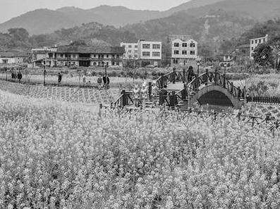 福州:年底前基本实现乡村振兴初级版以上目标