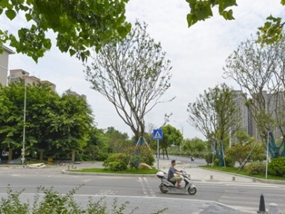 提升城市品质 福州林浦路沿线绿化再提升