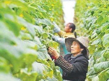 福清培训1000余名高素质农民 增强乡村振兴带动力
