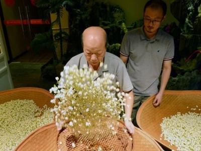 福州茉莉花茶窨制工艺 东西方交流史上的佳话