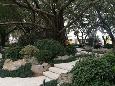 福州左海公园景观整治二期项目收官在即